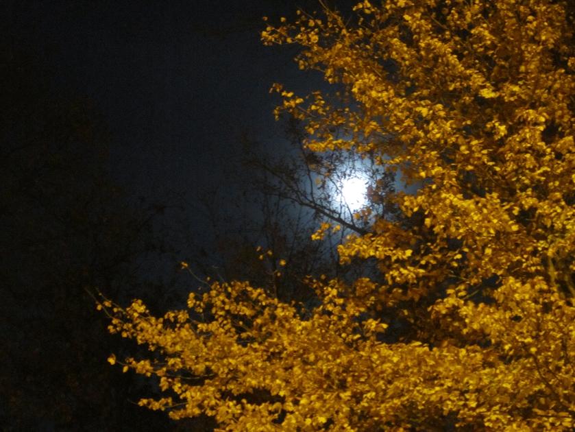 Full moon in Indiana.